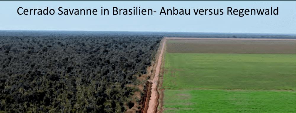 soja anbau regenwald brasilien