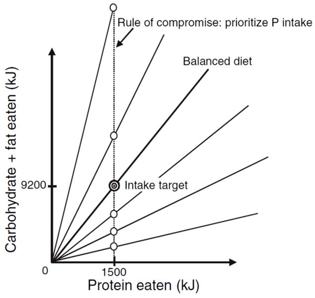 vegan abnehmen pflanzliches protein