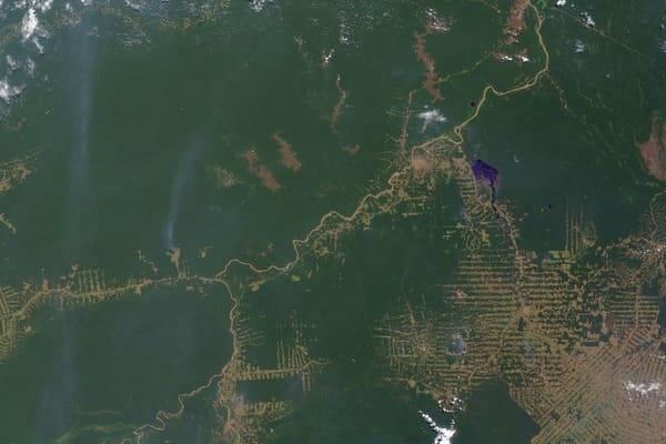 Amazonas Abholzung