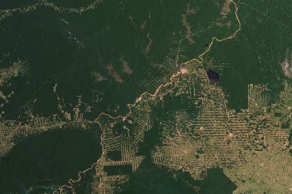 Amazonas Abholzung Weiden