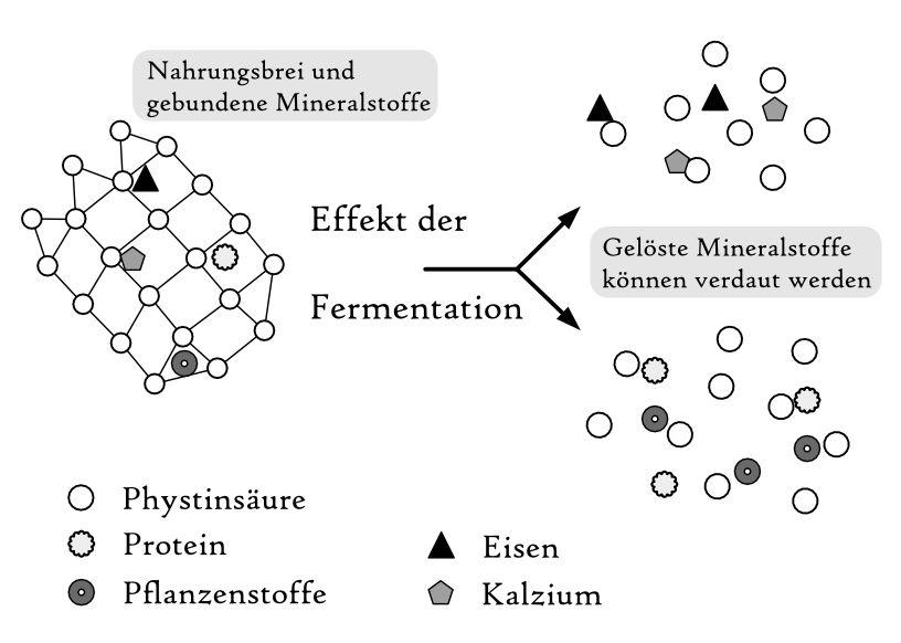 Eiweiß verdaulichkeit fermentation